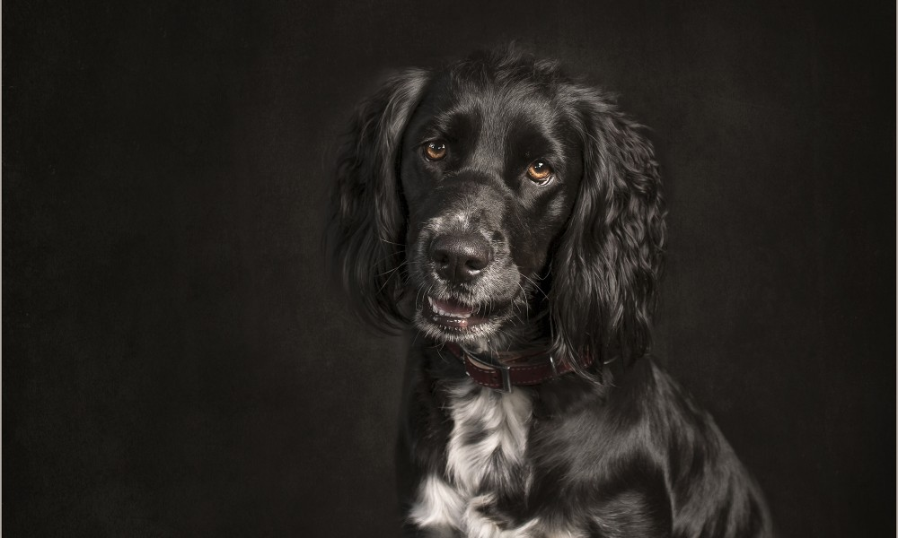 Specialist Pet Photography Dogs, Dog Photos, Dog Breeds, Dog Photographer
