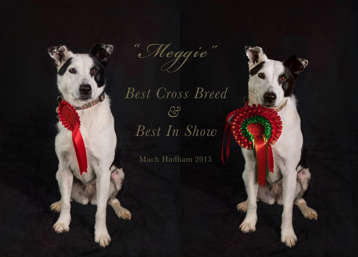Much Hadham dog show pictures by Detheo Photography