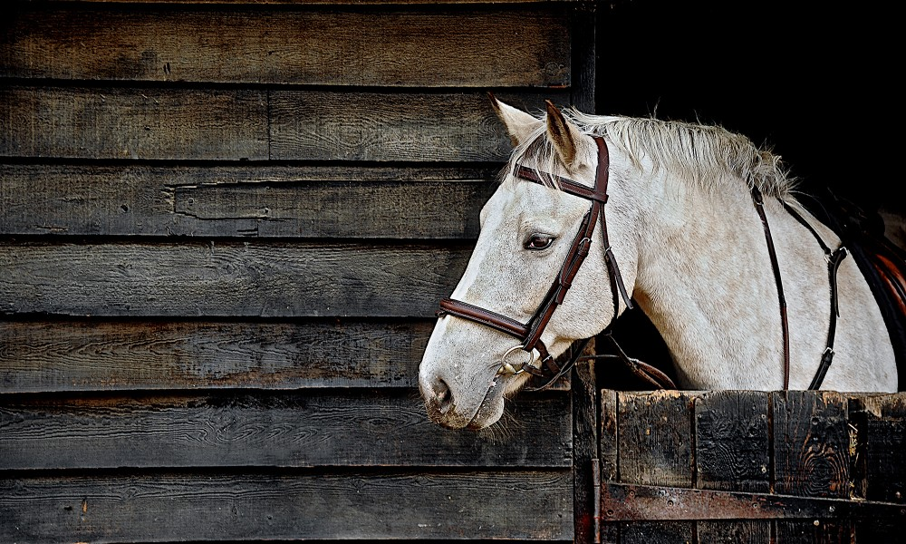 Specialist Pet Photography Horses / Equine, Pet Photography, Pet Photos