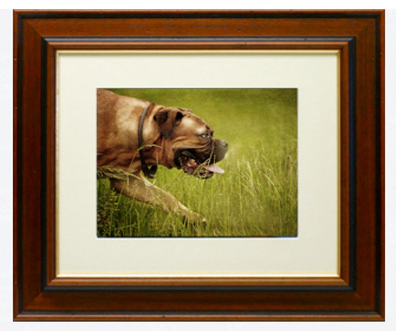 Framed Print For Dog Photography