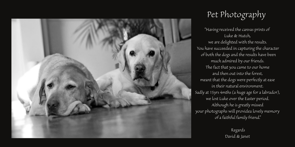 Specialist Pet Photography Dogs, Labrador, Dog Breeds, Dog Photography