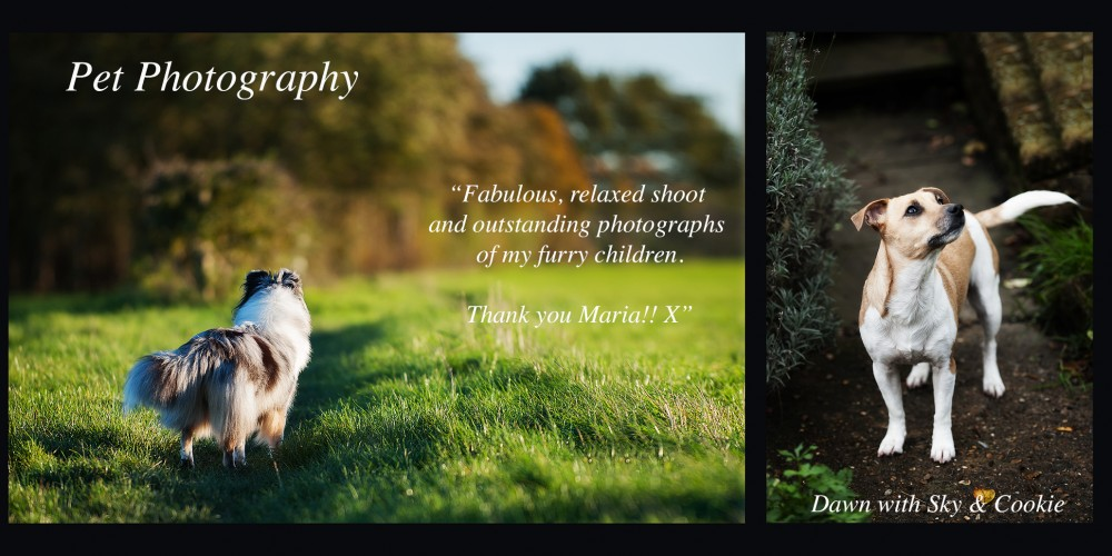 Specialist Pet Photography Dogs, Sheltie, Dog Breeds, Dog Photography