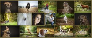 Pet Photography Collage Web
