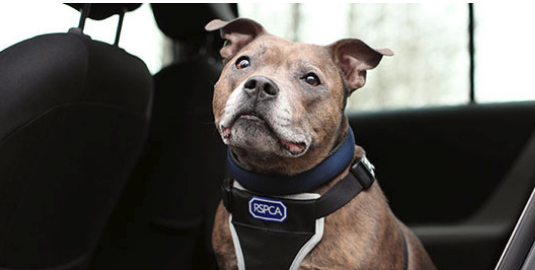 RSPCA Southridge Dogs show