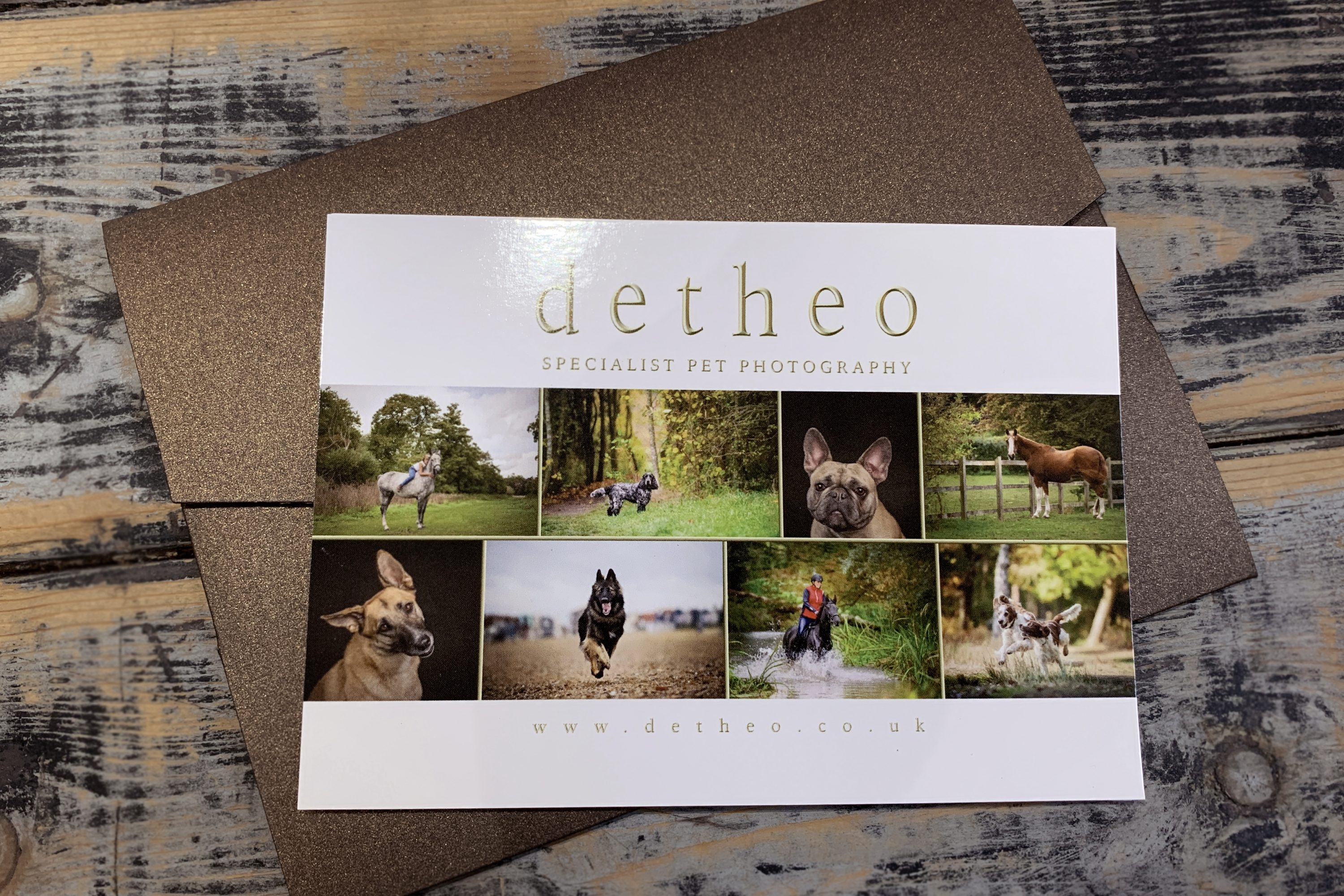 Specialist_Pet_Photography_gift_voucher_from_Detheo_Photography
