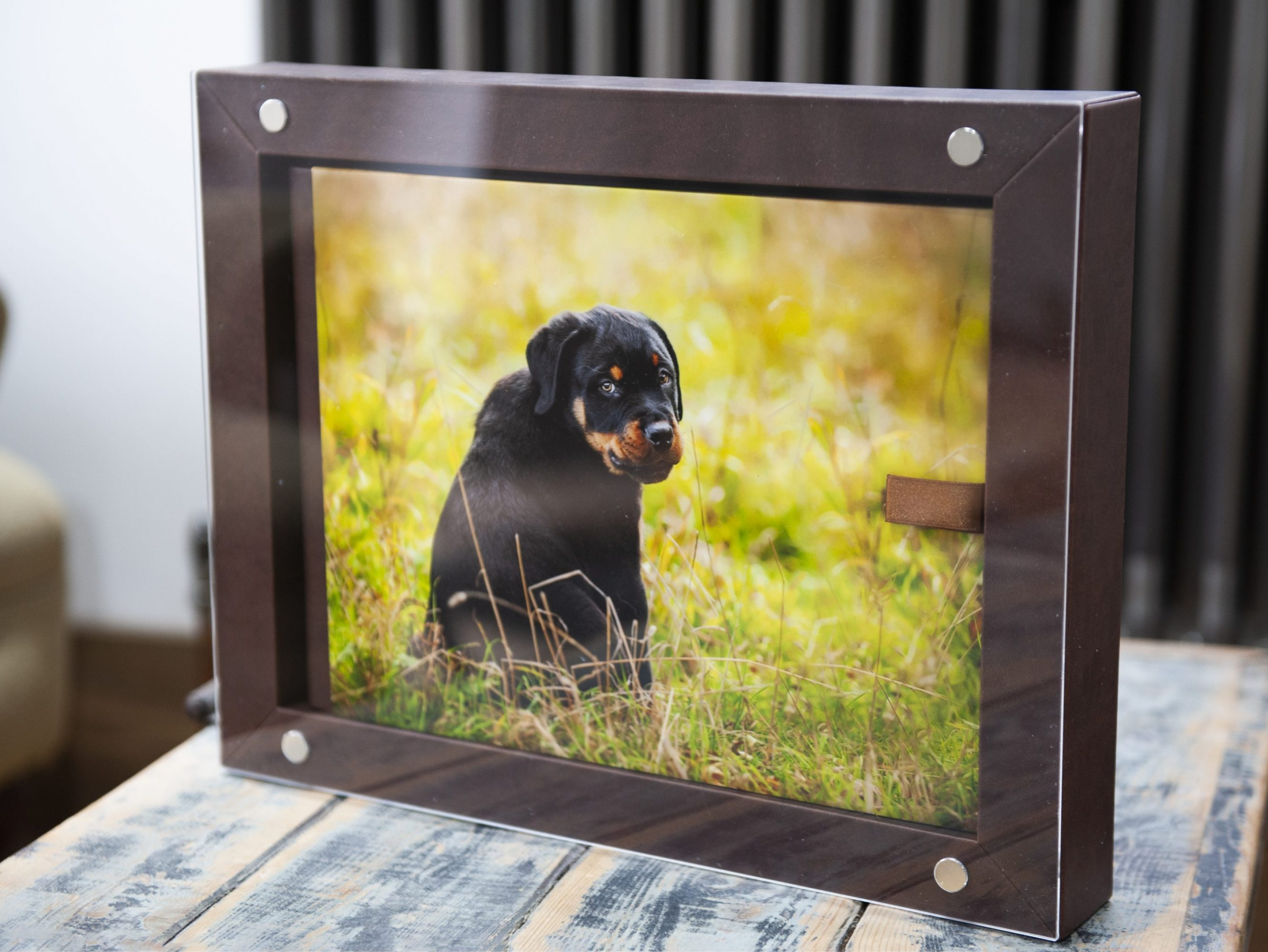 Handcrafted Album For Pet Photography