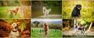 Dog Photography Event May 2021