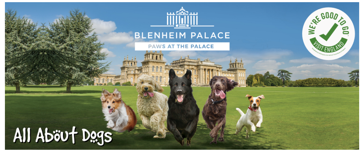 All About Dogs Show Blenheim Palace